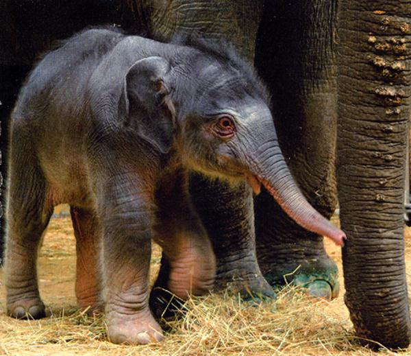 photograph of a baby elephant